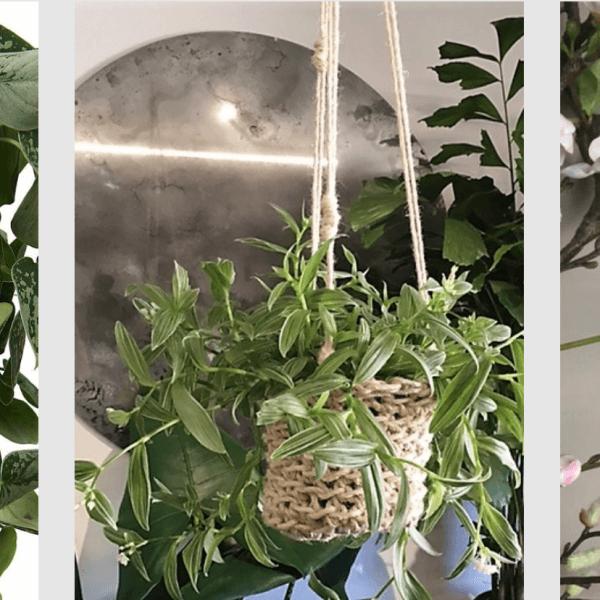 Cocoon&me various plant hangers