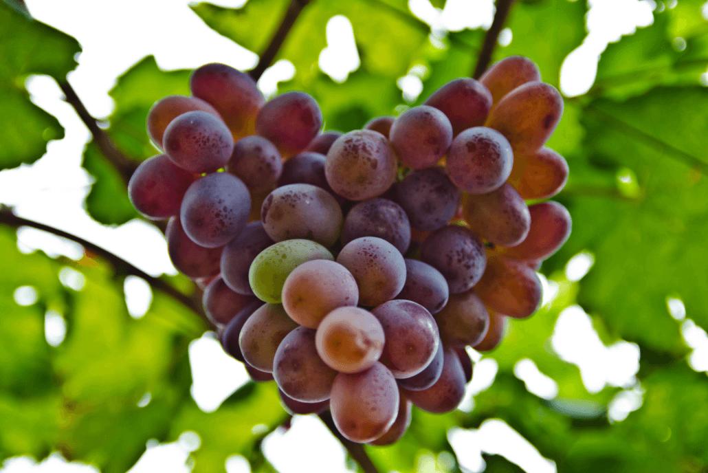 Newsletter 20.08.20 – Fruition